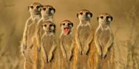 Ручной зоопарк Пенза