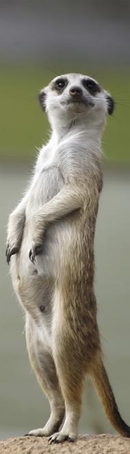 Ручной зоопарк в Пензе