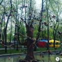 дерево счастья в пензе