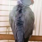 Попугаи Пенза