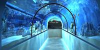 Океанариум в Пензе