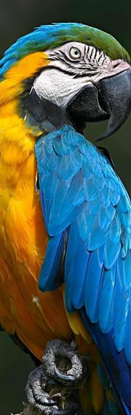 Выставка попугаев в Пензе
