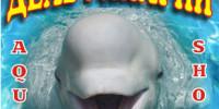 Дельфинарий в Пензе 2016