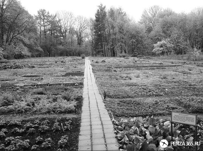 фото ботанического сада в пензе